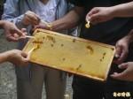 青農接班養蜂 蜂蜜獲得全國特優