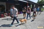 台東縣政府愛狗創舉 免費教民眾訓練狗
