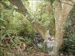 山區挖竹筍 樹叢驚見頭顱
