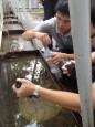 大巨蛋積水 周邊發現孑孓孳生罰6000元