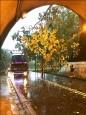午後大雨 竹山淹水、仁愛路斷