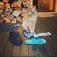 偷鞋習慣就是改不了...媽媽替「牠」善後