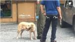 泰國曼谷爆炸案 警逮捕28歲嫌疑犯
