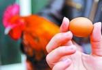 扯!母雞自己「變性」成公雞 不下蛋還長雞冠