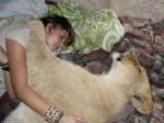 跟小貓一樣討抱抱! 南非女與母獅同眠