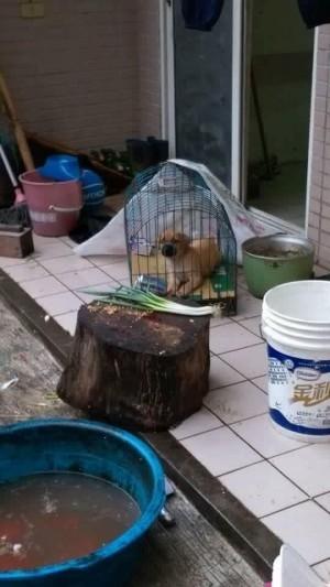 把狗狗和蔥、砧板放在一起…愛狗人士緊張