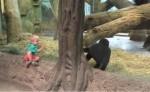 好療癒!男童碰上猩猩寶寶 隔著玻璃玩躲貓貓