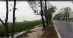 (更新)大雨直落!綠隧樟樹根部積水堪憂