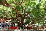 推「人樹共存」 台中市府邀民間護樹做認養