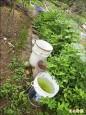 防登革熱 全面清除積水容器