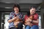 母雞當寵物 產蛋又能陪伴長者