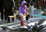 中國逮捕數人 懷疑預謀放鴿襲擊閱兵會場