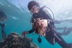 提供免費氣瓶午餐 墾丁潛店發起淨海