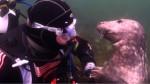小海豹黏潛水員 摸它肚子好陶醉