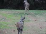母鹿被箭貫穿臉頰 全球集氣一年終獲救