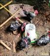 野犬破網闖雞場 雞屍遍地
