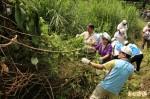 防治「綠癌」 林管處獎勵民眾拔小花蔓澤蘭、香澤蘭
