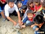 大聖嬰現象 澎湖海龜上岸產卵延後