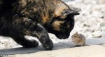 真實版湯姆與傑利! 貓和老鼠竟成為好友