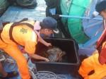 漁民意外網獲近10公斤綠蠵龜 檢傷後野放