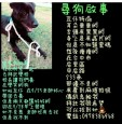 外埔國中校犬「瓦仔」走失 后里警方助返校