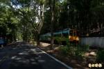 綠色隧道逾9成樹衰敗 南投燈會強裝燈飾挨批