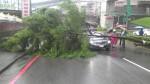 基隆下午一路樹倒壓自用車  幸無人傷亡