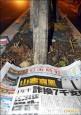 樹穴半張報紙大 板橋路樹栽種挨批