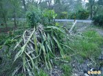 宜蘭兩次風災農損嚴重 縣府加碼補助
