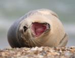 海豹萌翻了! 完美詮釋「笑得滿地打滾」