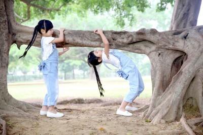 左左右右種樹    萌問大榕樹︰你幾歲啊