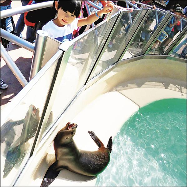 左左右右樂遊美 餵海獅看殺人鯨