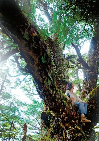 桂綸鎂《森》呼吸 全覽台灣山林美景