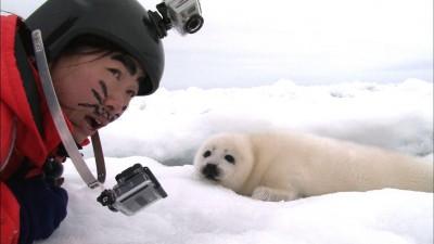 《阿Q冒險中》登台  粗眉Q妹零下低溫找海豹