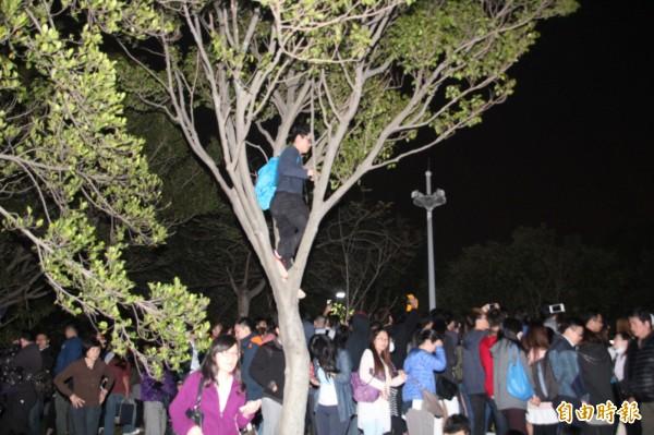 五迷太熱情! 當「猴子」爬樹看演唱會