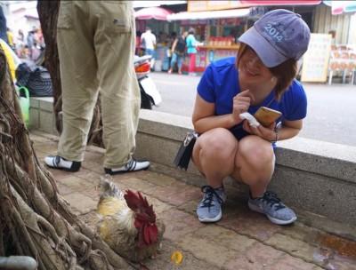訪不到柯P 陳斐娟瞻仰神雞敲碗seafood