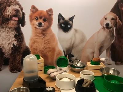 貓狗進食眉角多 食器墊高恐增特定疾病風險