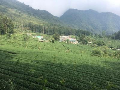 阿里山暑期必遊茶旅 夏戀森林茶會歡迎入席