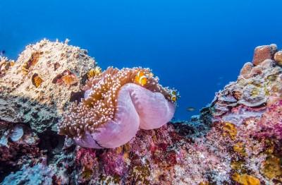 魅惑「科隆藍」  水底世界好繽紛