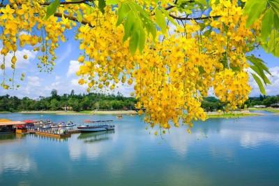 西拉雅國家風景區花朵爭豔  就是要你好看!