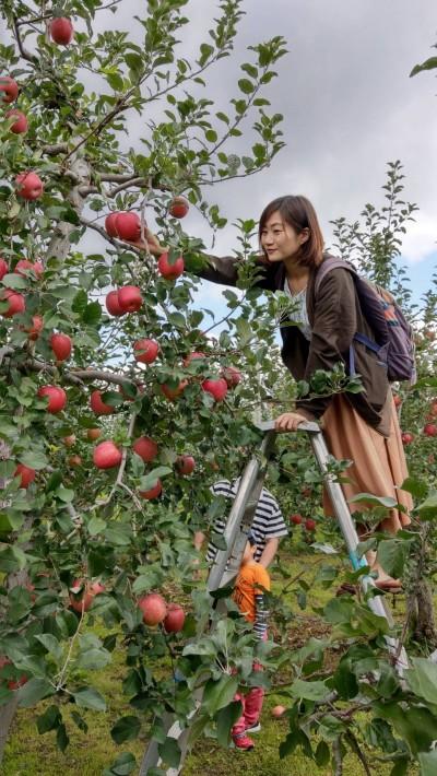到蘋果故鄉青森   這樣玩才過癮