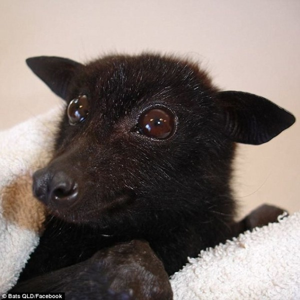 Dogs That Look Like Bats