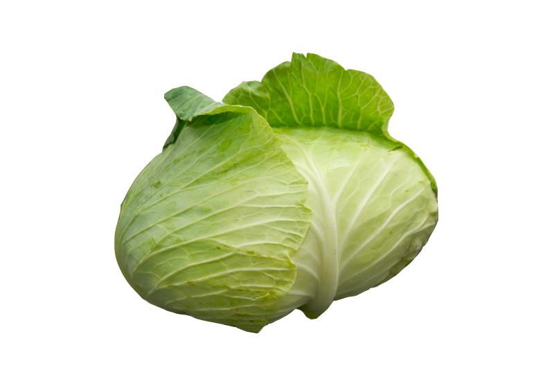 「高麗菜」的圖片搜尋結果