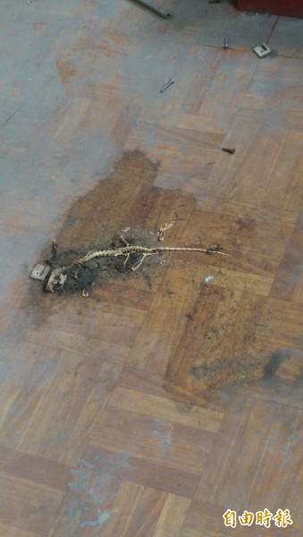 舊廈門派出所,閒置4年內部殘破不堪,地上處處可見動物屍骨。(記者葉冠妤攝)