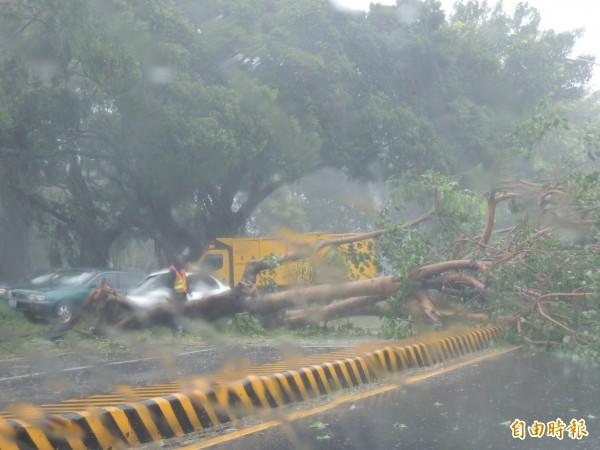 台南路樹傾倒上千棵,市區南門路被橫倒路樹阻擋而中斷。(記者蔡文居攝)