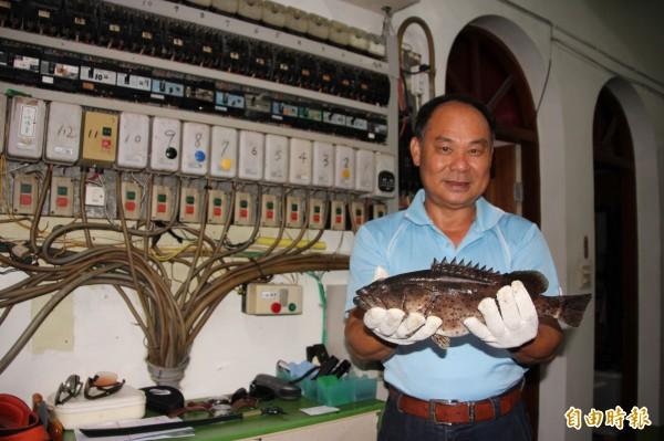 洪瑞崑的石斑,再獲漁業署的優質石斑魚肯定。(記者陳彥廷攝)