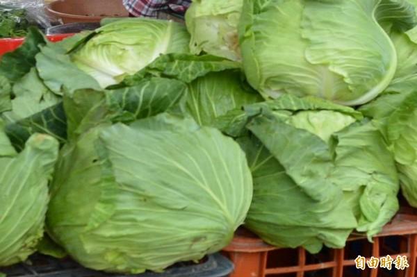杜鵑颱風過後產地菜價飆漲,連帶使得傳統市場菜價上揚,其中高麗菜價每台斤高達95元,讓菜籃族買不下手。(記者湯世名攝)