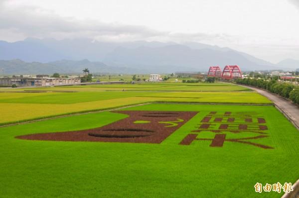 花蓮玉里鎮客城的稻田中,巨大的天貓圖案及「天猫国际」簡體字廣告圖案,攻佔稻田的景象十分引人側目。(記者花孟璟攝)
