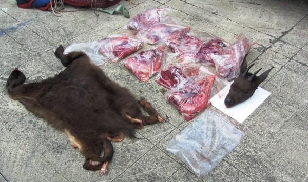森林警察在阿里山地區查獲非法盜獵保育類台灣野山羊,已被砍頭、剝皮、肢解。(記者余雪蘭翻攝)