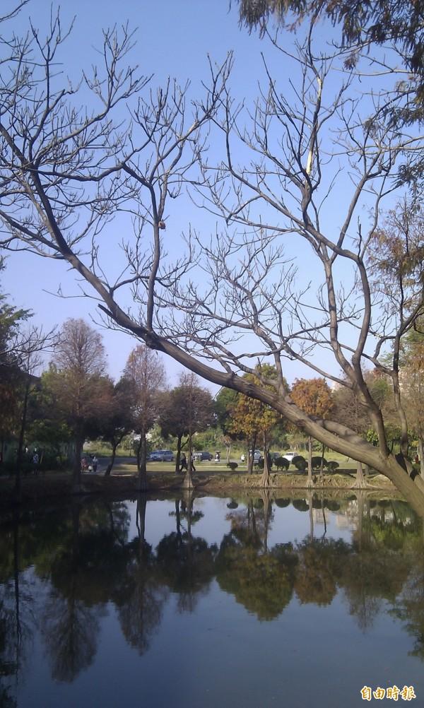 巴克禮公園的埤塘,為台南市區少數僅存的埤塘。(記者蔡文居攝)